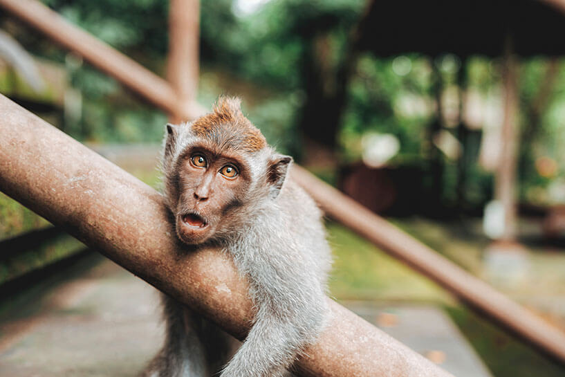 How can we overcome the good/bad impression over the role of an animal